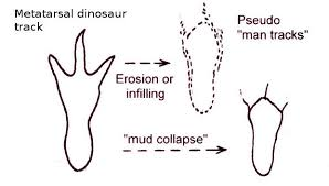 River Bed Definition Paluxy Dinosaur