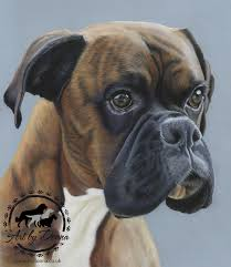 boxer dog uk pet portraits u0026 animal art by uk artist donna portrait of boxer