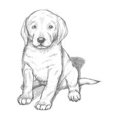 draw coloring pages exquisite puppy drawing how to draw a labrador11