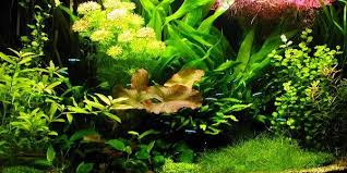 Plants For Aquascaping Understanding Dutch Aquascaping Style The Aquarium Guide
