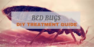 How To Check For Bed Bugs At Home Home Remedies For Bed Bugs U2013 How To Get Rid Of Bed Bugs Fast