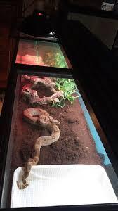 reptile snake lizard tank cage aquarium terrarium setup and stand
