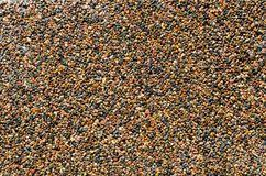 pebble flooring stock photos images pictures 417 images