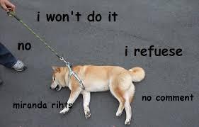 Law Dog Meme - shibe meme refuses to follow the man s law miranda rights dog