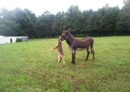 Funny Donkey Memes - put me like 盞 donkeys run down and kill coyotes on a fairly