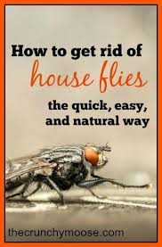 How To Get Rid Of Backyard Flies by How To Get Rid Of House Flies The Easy And Natural Way