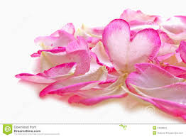 valentine rose petals heart stock photography image 34529002