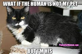 Meme What If - what if the human is not my pet funny cat meme