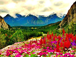 sky mounatins nature flowers combinations green colors flower