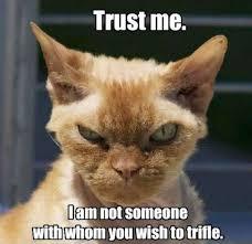 Mean Cat Memes - mean cat w630