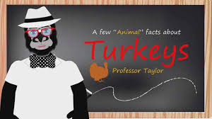 facts about turkeys thanksgiving for educational