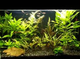 Fluorescent Light For Plants Solved Re Betta Fish Plants Petco Community 86128