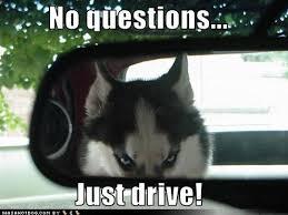 Funny Husky Memes - funny huskies meme by xzapp memedroid
