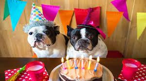 dog birthday party diy 3 ways to throw the best dog birthday party