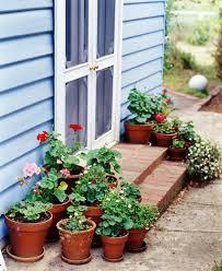 australian native shade plants best pot plants for sun and shade burke u0027s backyard