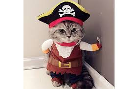 top 10 cat halloween costumes to hiss at