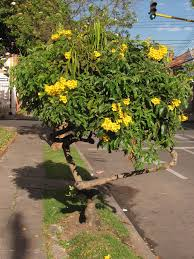 why use native plants increasing the native plants of colombian cities u2013 the nature of