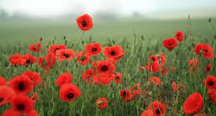 veterans day 2015 lessons tes teach
