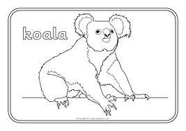 australian wildlife primary teaching resources printables