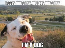 Silly Dog Meme - silly dog memes image memes at relatably com