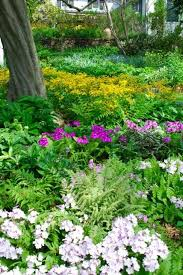 123 best garden in the shade images on pinterest shade plants