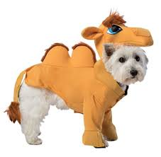 dog halloween costumes images the cutest cat and dog halloween costumes ebay