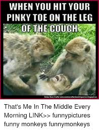 Funny Monkey Memes - when you hit your pinky toe on the leg of the couch dollar store