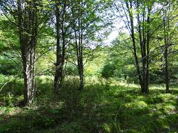 New York forest images 12 acres bordering state forest in chenango co ny landquest jpg
