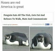 Funny Penguin Memes - 15590167 1688446511447139 6600868079012982184 n jpg 960 892