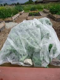 planting the kitchen garden in august that bloomin u0027 garden