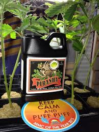 piranha advanced nutrients 13 best nutrients images on cannabis bloom and pipes