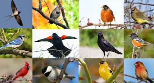 Bird In Backyard by Quiz Can You Name These 20 Common North American Backyard Birds