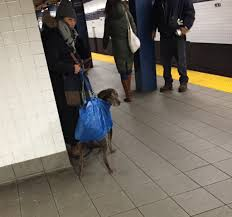 so nyc mta subway banned all dogs unless the owner carries them