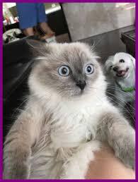 Cat Meme Generator - best feed me flip of cute cat meme generator style and trend cute