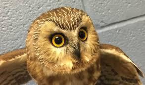 Backyard Animals Lyrics Wildlife Rehabilitation Center At Wisconsin Humane Society Home