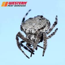 western pest services home facebook