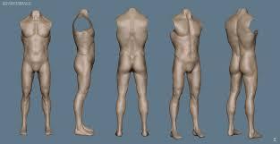 Human Anatomy Male Human Anatomy Male Periodic Tables