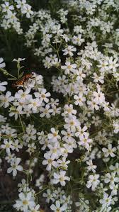 native plant source michigan wildflower farm