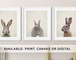 rabbit nursery bunny nursery decor etsy