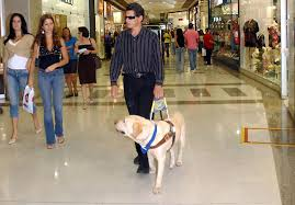 guide dog wikipedia