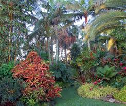florida native plants pictures jesse durko tropical garden and nursery