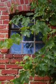free images tree nature architecture wine farm antique