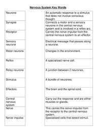 nervous system key words worksheet by bobfrazzle teaching