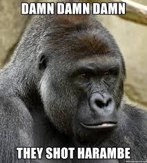 Funny Gorilla Memes - gorilla memes 28 images 17 best ideas about harambe meme on