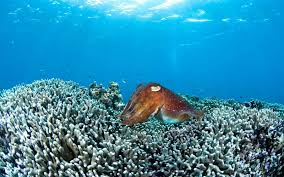 thanksgiving reefs more than 70 percent of japan s largest coral reef is dead travel