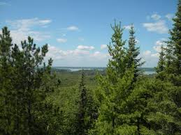 here s how evergreen trees stay green all year minnesota