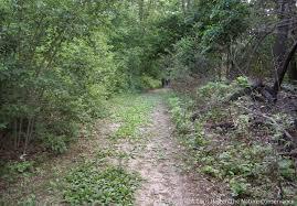 saving nebraska u0027s oak woodlands u2026 by burning them the prairie