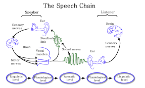 Anatomy And Physiology Of Speech Anatomy U0026 Physiology For Speech Language And Hearing Audio