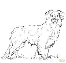 nova scotia duck tolling retriever coloring page free printable