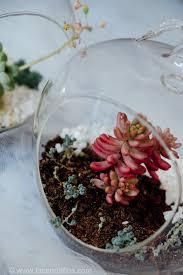 my succulent terrariums 6 care tips lace n ruffles
